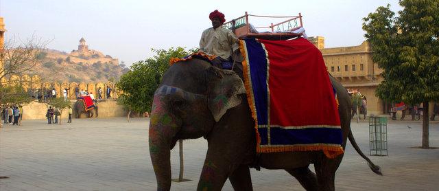 amer elephant ride