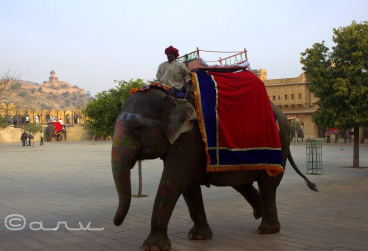 elephant ride at amer palace jaipur