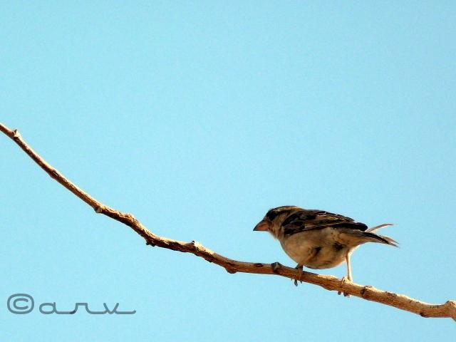 jaipur birding