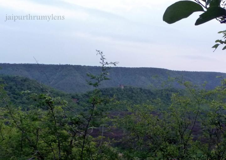 jhalana-forest-in-jaipur