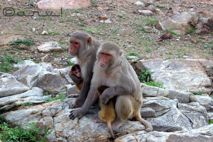 surya-mandir-monkey-temple-jaipur