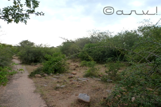 heritage-water-walk-jaipur-nahargarh