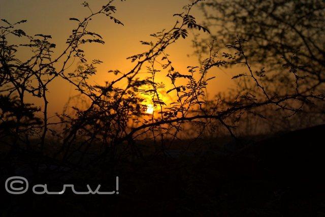 friday-skyatch-jaipur-marigold