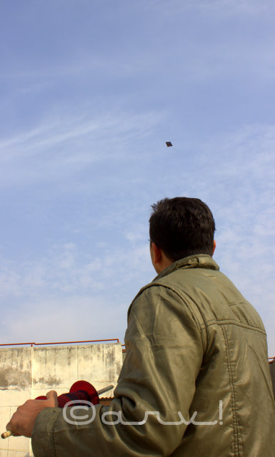 flying-kite-in-jaipur-on-makar-sakranti-festival