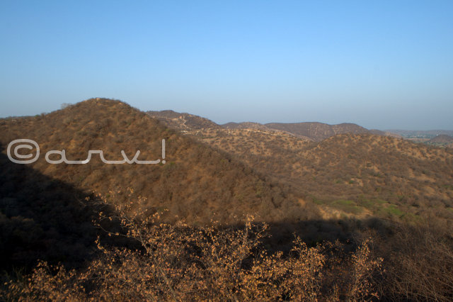 aravali-hills-forest-jaipur-tree-cover-jaipurthrumylens