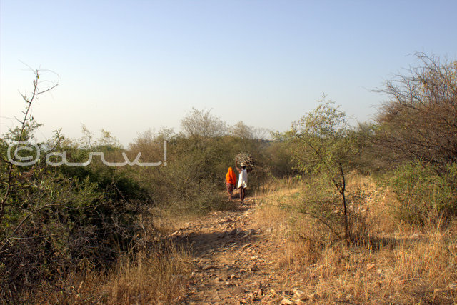 orest-conservation-in-jaipur-on-earth-day-aravali-hills-jaipurthrumylens