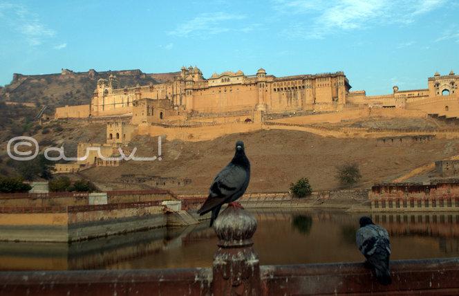 maota-amer-palace-picture-with-pigeons-jaipur-jaipurthrumylens