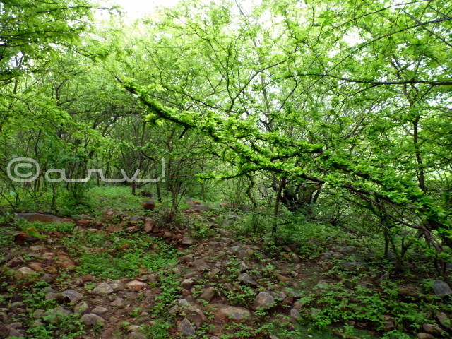forest-of-jhalana-jaipur-rainy-season-monsoon