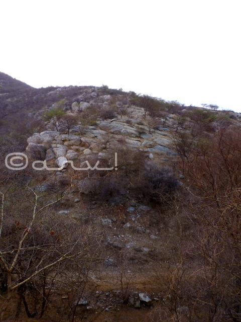 jhalana-foest-jaipur-aravali-hills-jaipurthrumylens
