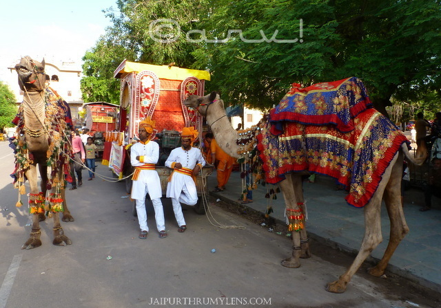 camels-in-jaipur-janmasthmi-celebrations-procession-from-Govind-Dev-ji-temple