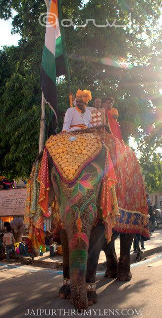 decorated-elephant-city-palace-jaipur-govind-dev-ji-temple-procession-janmasthmi