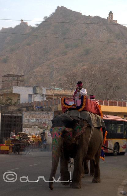 elephant-ride-amer-palace-jaipur-jaipurthrumylens