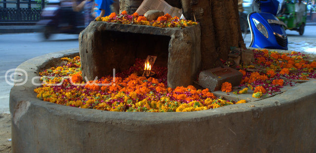 Janmastami Celebrations in Jaipur/ Why Jaipur loves Govind Dev Ji?