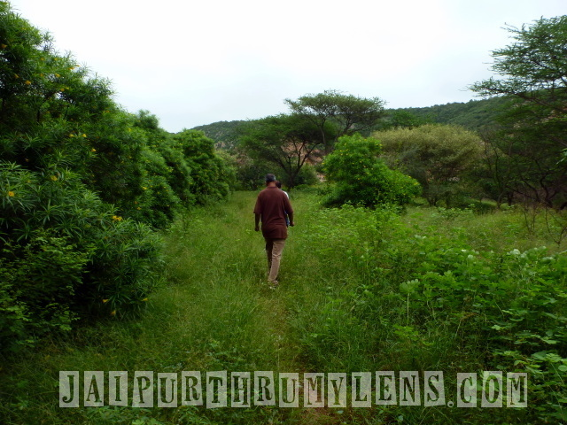 walk-through-world-forestry-arboretum-jaipur-jhalana-nature-lovers-jaipurthrumylens