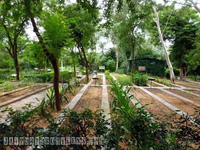 world-forestry-arboretum-jaipur-forest-department-jaipurthrumylens