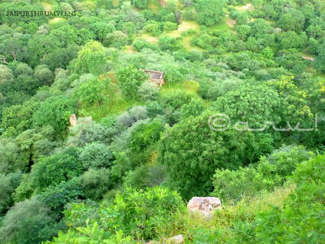 ruins-of-palace-mariam-lover-of-jagat-singh-amer-jaipur-jaipurthrumylens