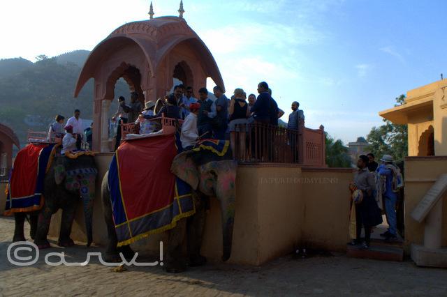elephant-ride-amber-fort-tourists-waiting-jaipur-india