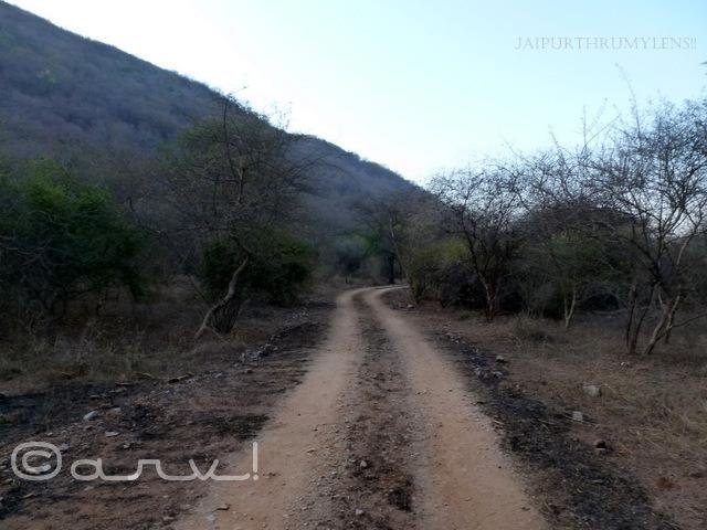 jhalana-wildlife-safari-jaipur-neem-gatta-trail-jaipurthrumylens