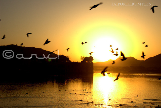 jaipur sunrise at jalmahal water palace mansagar lake jaipurthrumylens