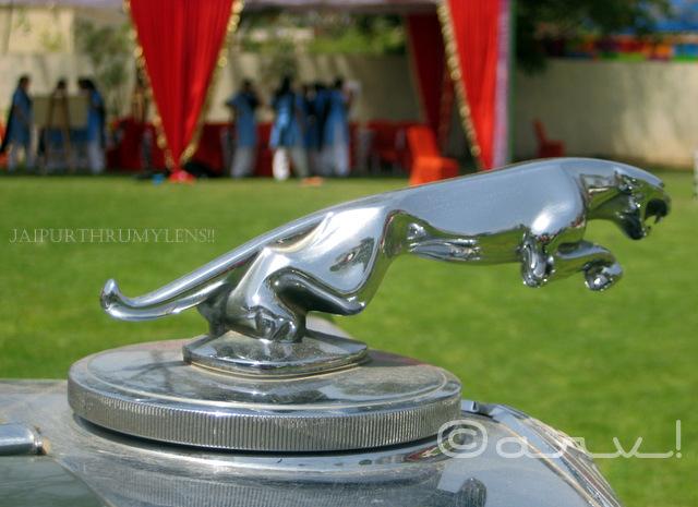 vinatge-car-jaguar-logo-jaipur-cartist-2017-jai-mahal-palace-jaipurthrumylens