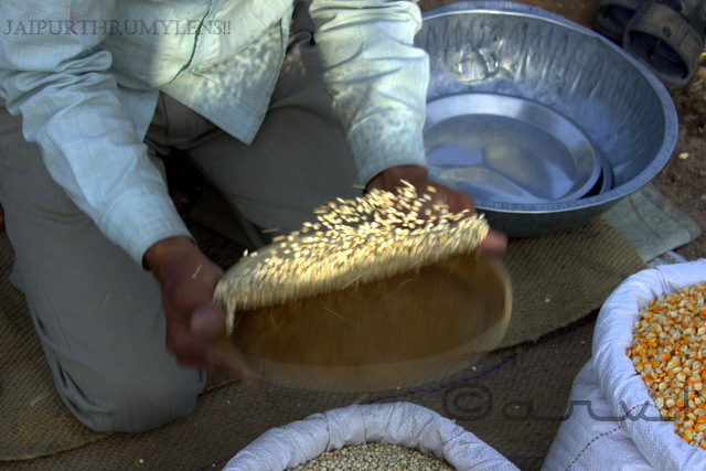 bird-feed-grains-seller-jaipur-bazzar-market-photography-walk