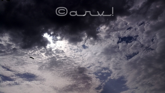 skywatch-friday-monsoon-in-jaipur-overcast-clouds-with-eagle-in-flight-jaipurthrumylens