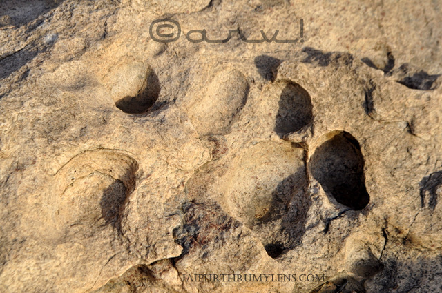 leopard-pug-marks-on-on-stones-aravali-hill-design-pattern