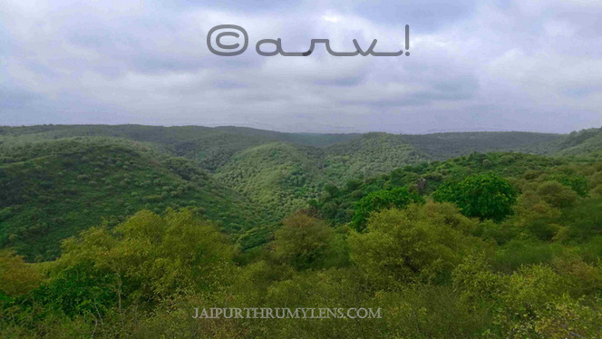 trekking-in-jaipur-aravali-hill-forest-monsoon