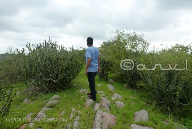 Euphorbia-Caducifolia-jhalana-forest-jaipur-trekking-thhor-danda