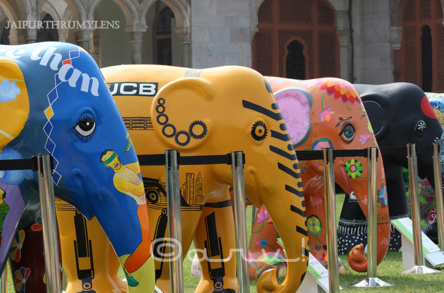 elephant-parade-india-2017-albert-hall-museum-jaipur-jaipurthrumylens