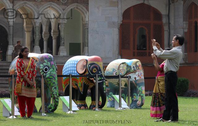 elephant-parade-india-albert-hall-museum-jaipur-jaipurthrumylens