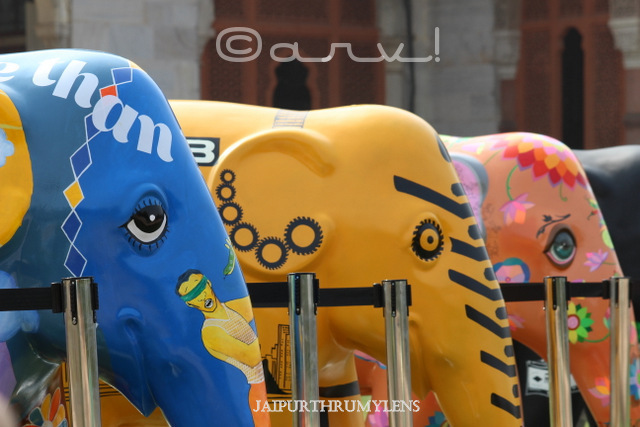 the-elephant-family-elephant-parade-jaipur-india