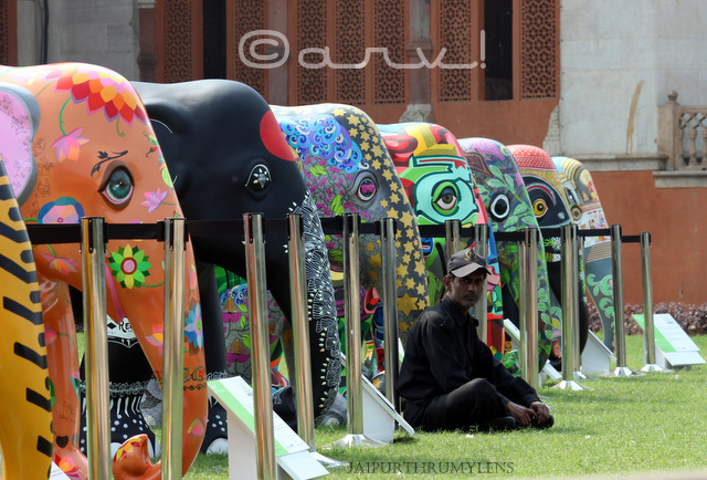 travel-to-my-elephant-albert-hall-museum-jaipur