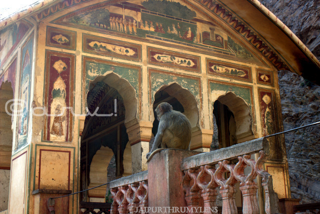 galta-monkey-temple-jaipur-architecture-india