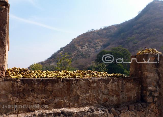 hindu-pilgrim-galtaji-monkey-temple-jaipur