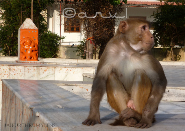 lord-hanuman-idol-monkey-temple-galtaji-jaipur
