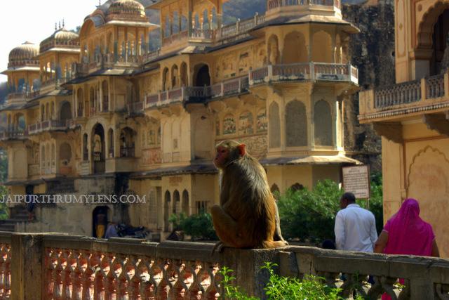 monkey-temple-jaipur-galtaji-jaipur