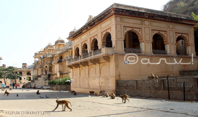 monkey-temple-jaipur-timing