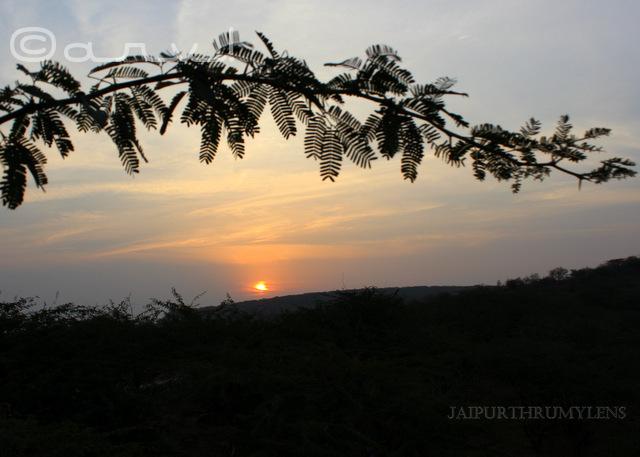 jaipur-sunrise-thursday-tree-love-skywatch-friday