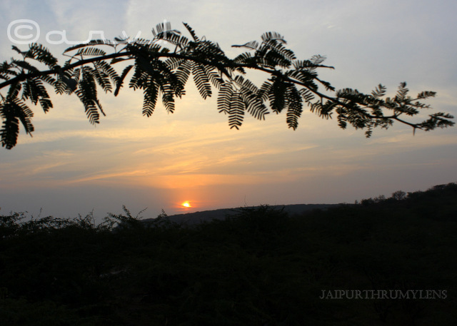 jaipur-sunrise-thursday-tree-love-skywatch-friday
