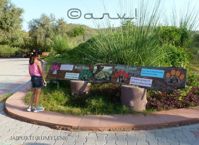 asiatic-lion-information-nahargarh-zoological-biological-park-jaipur-zoo-photo