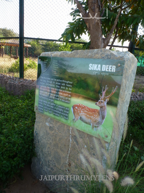 information-on-deer-nahargarh-zoological-biological-park-jaipur