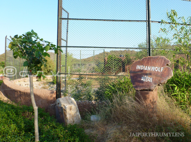 wolf-information-sign-board-photo-nahargarh-biological-park-jaipur-zoo