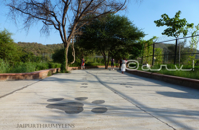 layout-nahargarh-zoological-biological-zoological-park-jaipur