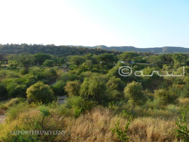 nahargarh-biological-zoological-park-jaipur-landscape-photo-layout