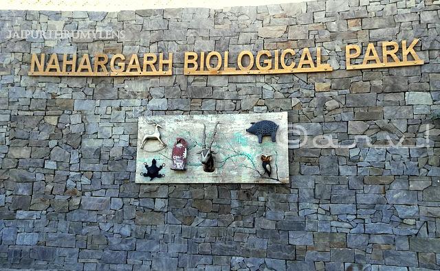nahargarh-biological-zoological-park-kukas-jaipur-image