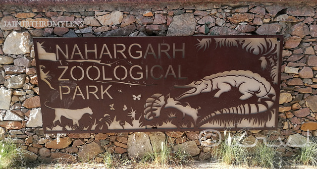 nahargarh-zoological-biological-park-jaipur-kukas-review
