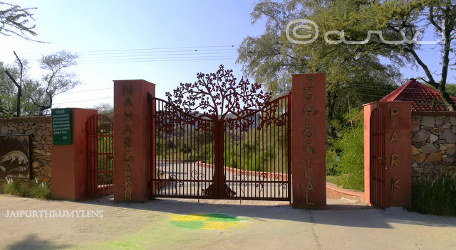 nahargarh-zoological-biological-zoological-park-ticket-jaipur-zoo