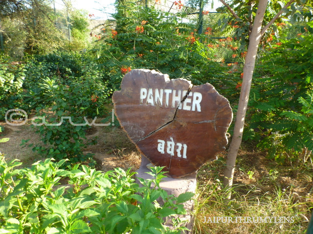 sign-board-panther-nahargarh-zoological-biological-park-jaipur-zoo