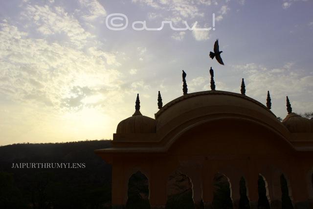 ghat-ki-guni-jaipur-pigeon-flying-in-sky-skywatch